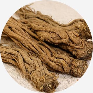 참당귀 뿌리 추출물